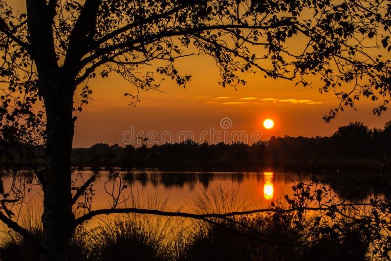 Golden sunset royalty free stock image