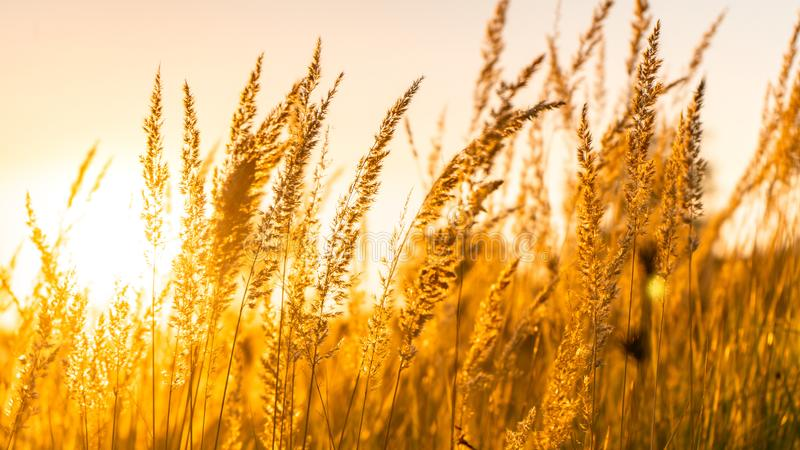 Golden sunset in mid summer. Countryside farm grass meadow nature panorama sky royalty free stock photos