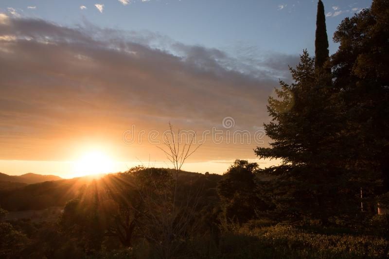 Gold sunset over southern California hills in autumn, silhouette of large pine tree, live oaks, hills and mountains against warm p. Golden sunset over southern stock image