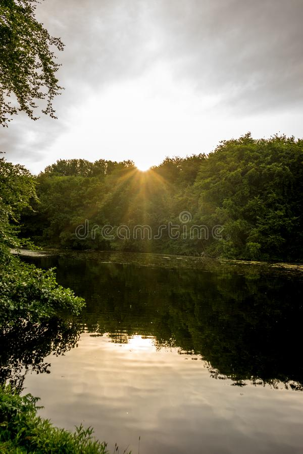Golden sunset over trees in Haagse Bos, forest in The Hague stock image