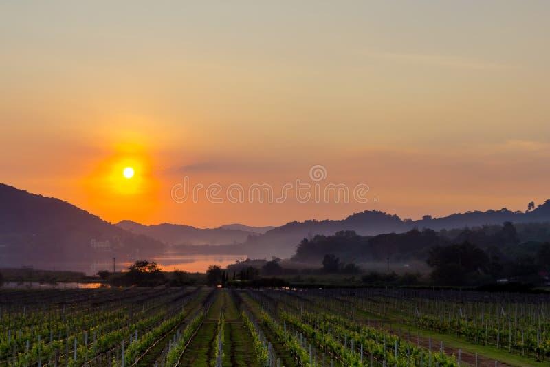 Golden sunset at Silver Lake Pattaya royalty free stock photography