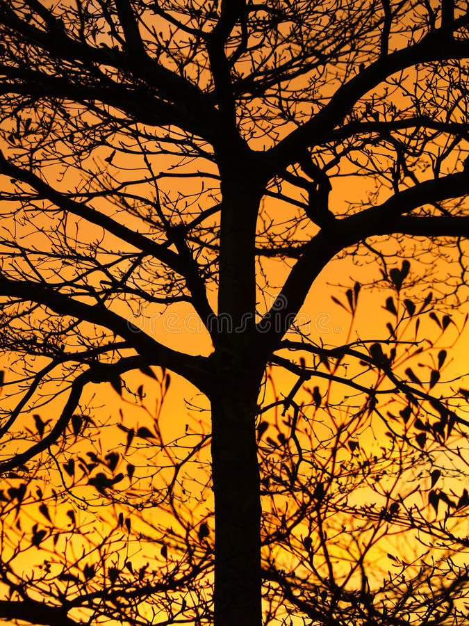 Download Golden Sunshine And Beautiful Silhouette Of Tree Stock Image - Image: 24213067