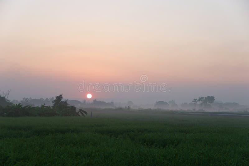 Golden sunshine light on rice paddy field in the morning. Golden sunshine light on rice paddy field in Thailand stock photos