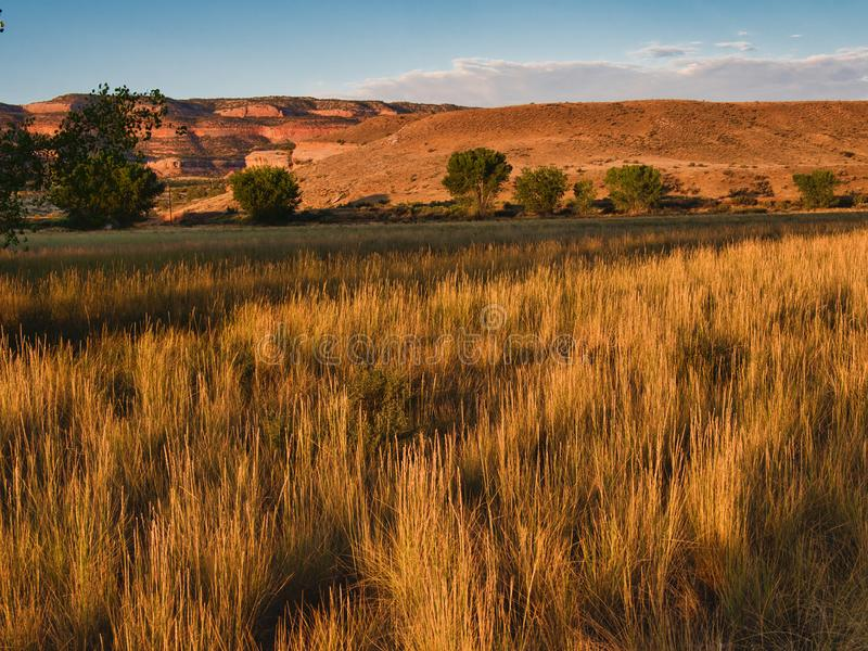 Golden Tall Grass of Late Summer. Horsethief Canyon State Wildlife Area, near the Black Ridge Canyons Wilderness and Colorado National Monument.   In the Grand stock image