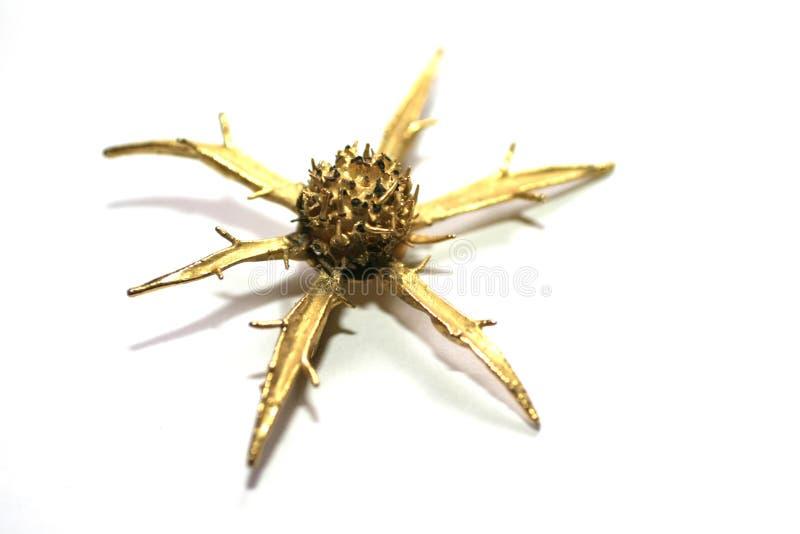 Golden thorn macro royalty free stock image