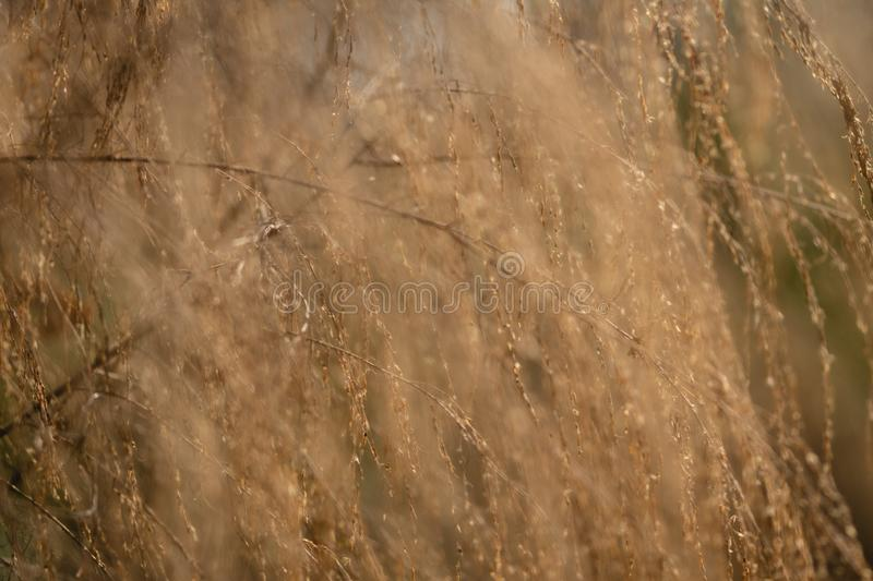 Golden toned abstract background of sunlight hitting wild plants. In the woods royalty free stock image