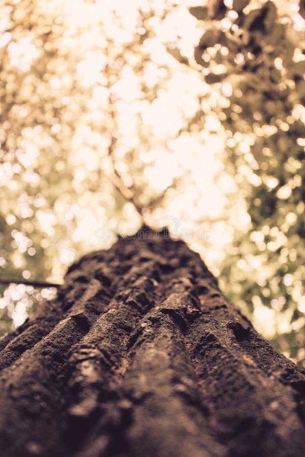 Golden tree stock image