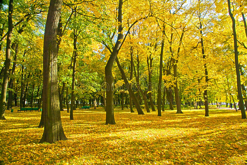 Golden Trees In Park Stock Photography
