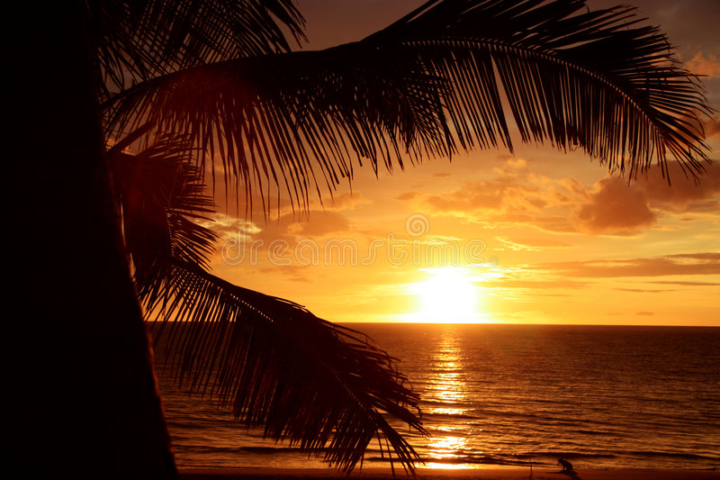Golden Tropical Sunset royalty free stock image