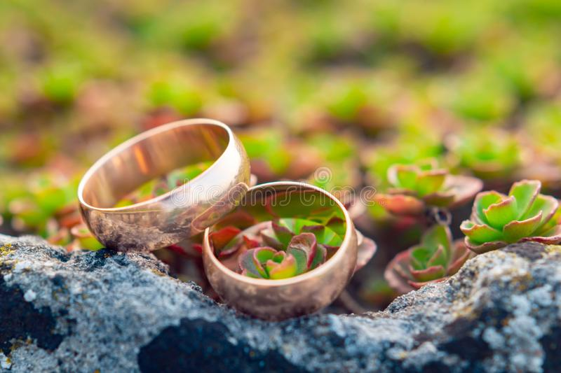 Golden wedding rings on on small succulents stock photography