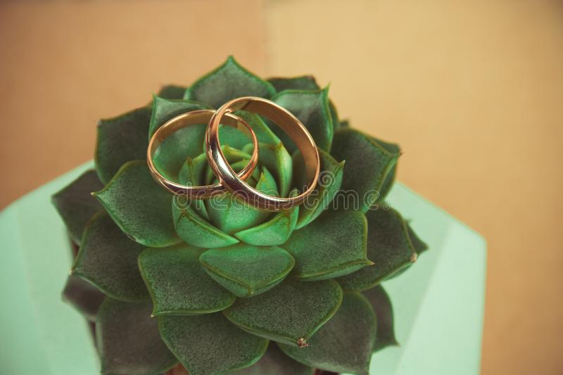 Golden wedding rings on a succulent plant top view royalty free stock photo