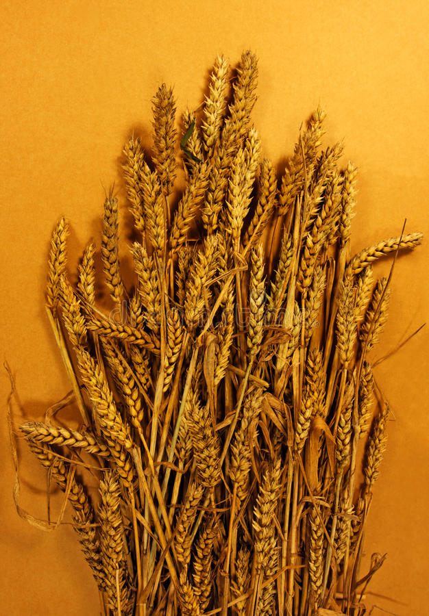 Download Golden wheat stock image. Image of cereal, bunch, background - 22959853
