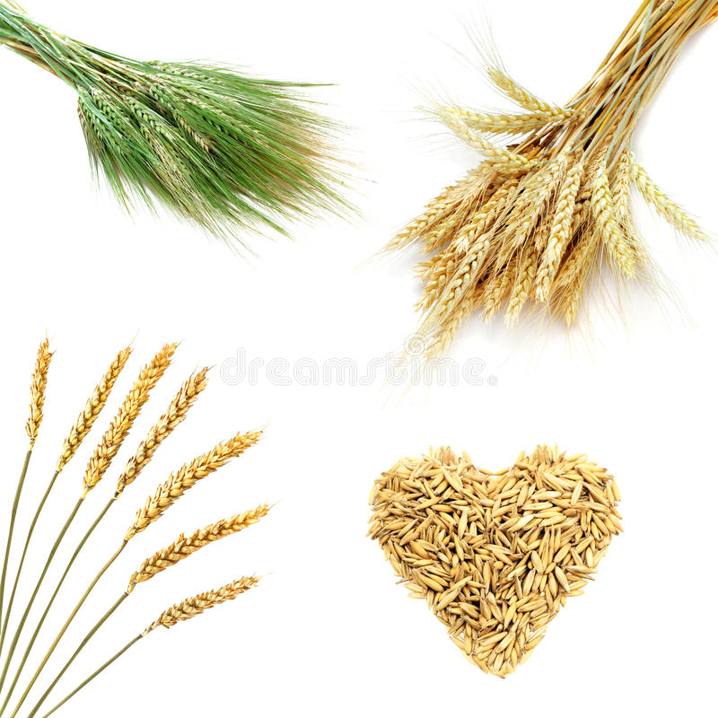 Download Golden Wheat Ears  Isolated On White Background Stock Image - Image: 10736061