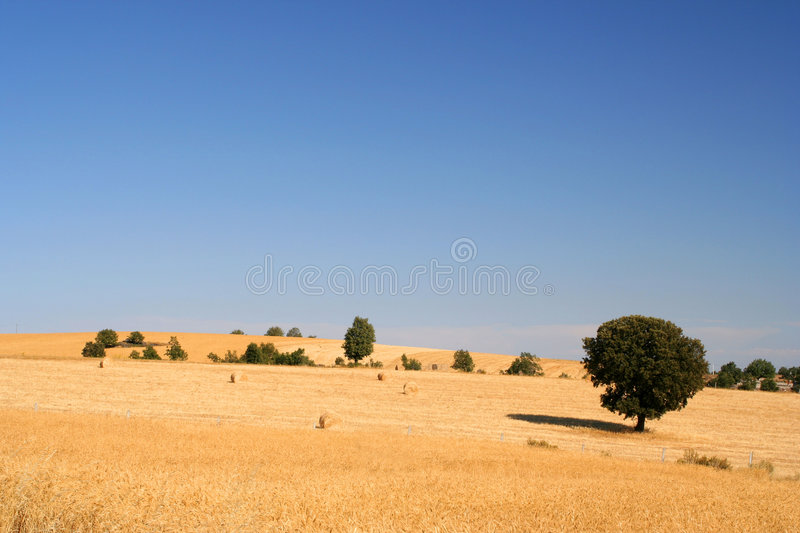 Download Golden wheat field stock photo. Image of country, meadow - 175746