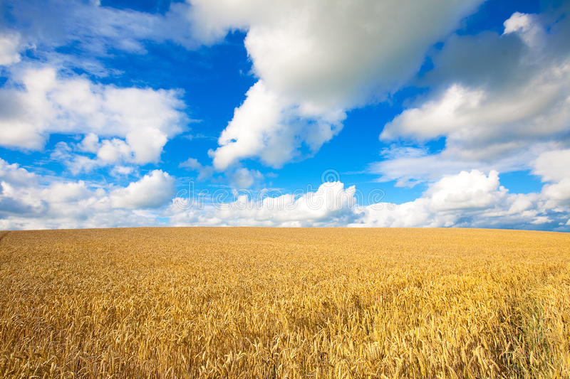 Download Golden Wheat Field Against Blue Sky Stock Photo - Image: 18335278