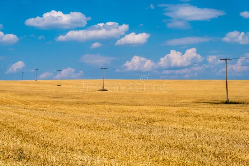 Golden wheat field against a blue sky, Ukraine stock image