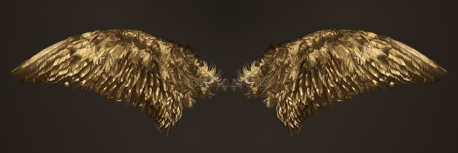 Golden wings. Two golden wings isolated on dark background
