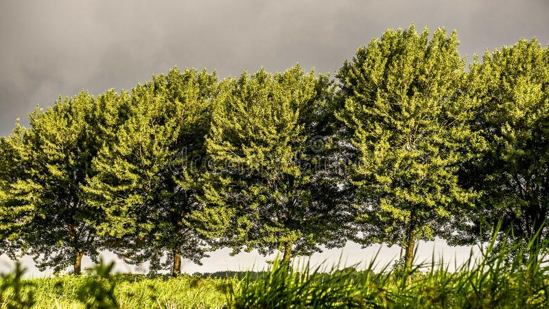 Golden winter sun on trees in approaching storm. Beautiful warm colors and gray background trees grass wind imminent storm royalty free stock images