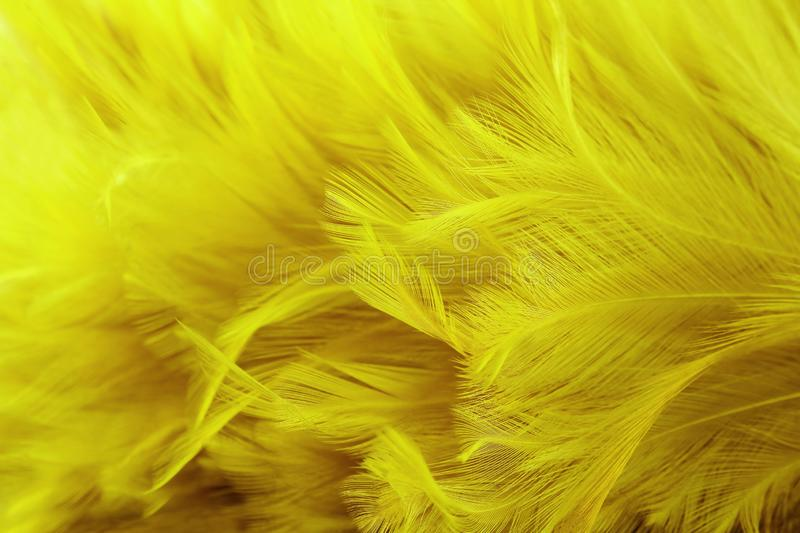 Golden yellow feathers texture with high resolution for background and design.  stock image
