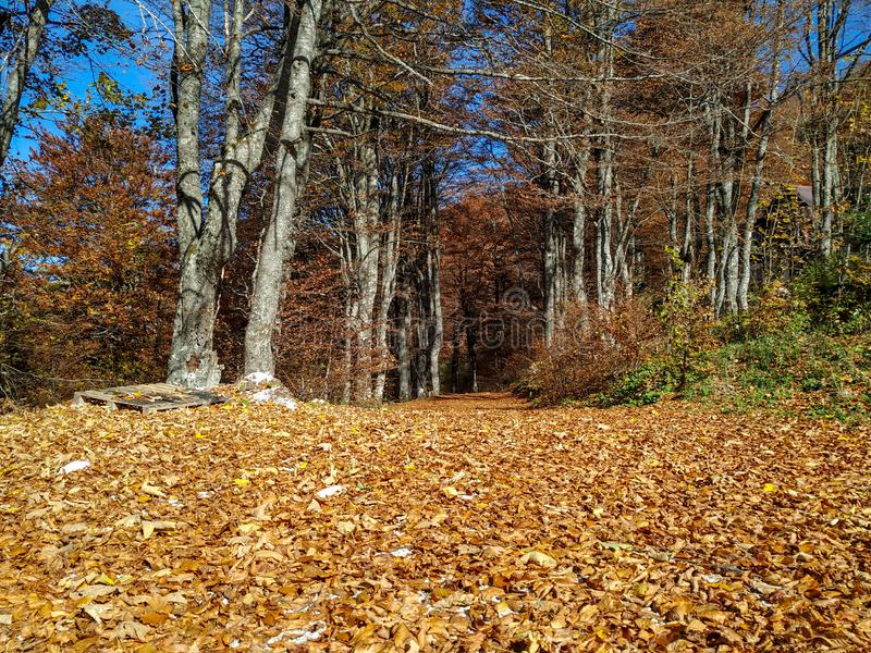 Golden yellow leaves on the ground in the autumn season on a calm sunny autumn fall day for relaxing in the natural environment stock photo