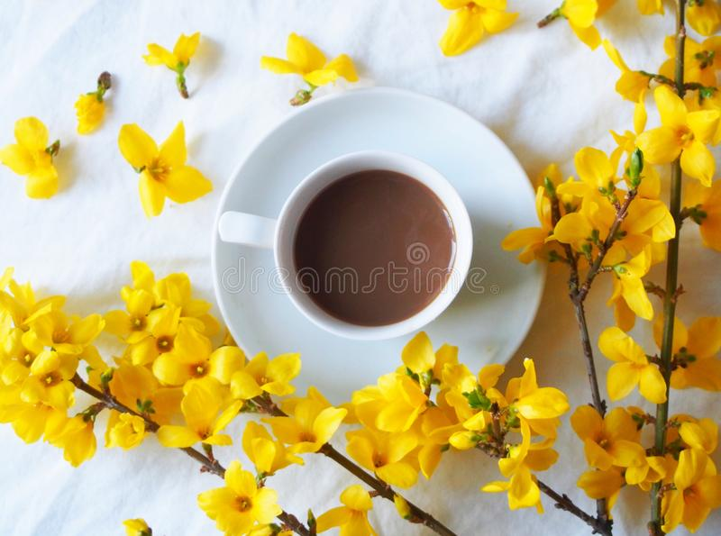 Goldenchain with coffee stock image