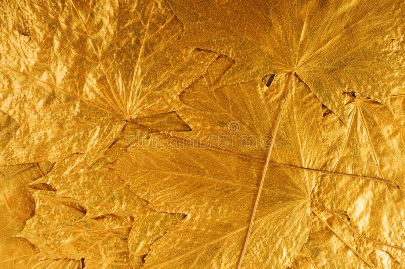 Goldene Ahornholzbaumblätter stockfotos