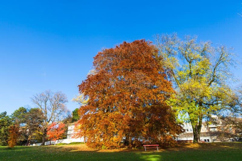 Goldene Bäume und Blätter im Herbst lizenzfreies stockbild