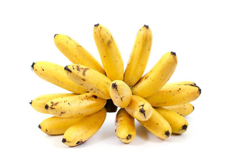 Goldene Banane lokalisiert auf weißem Hintergrund Pisang mas-Banane lokalisierte Brütete mehr lokalisierte Banane aus Banane getr stockfoto