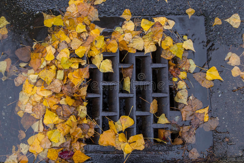 Goldene Blätter, die einen Gully verstopfen lizenzfreies stockbild