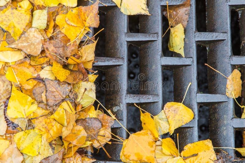 Goldene Blätter, die einen Gully verstopfen stockbild