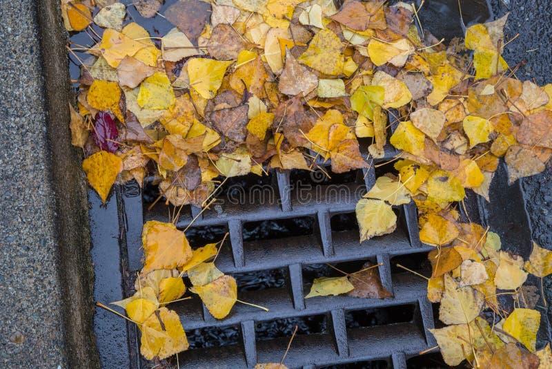 Goldene Blätter, die einen Gully verstopfen lizenzfreie stockfotos