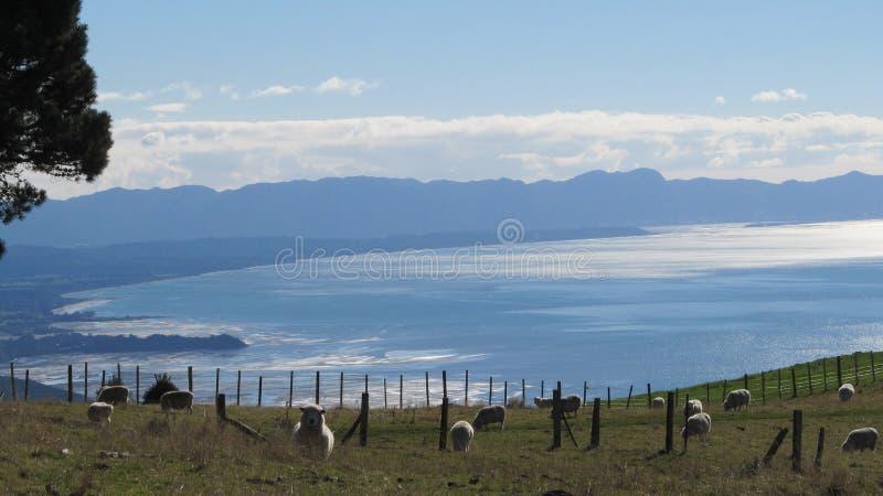 Goldene Bucht, Neuseeland stockfotografie