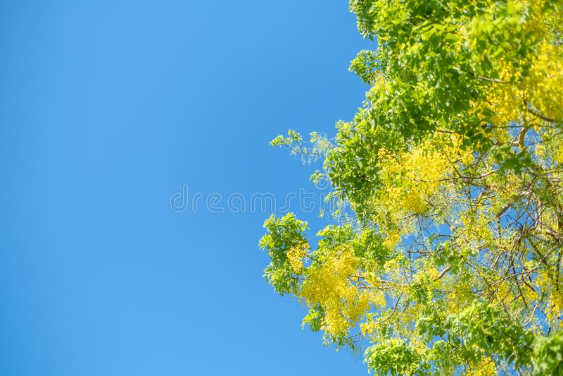 Goldene Duschbaum, nationale Blume der Kassiefistel von Thailand lizenzfreies stockbild