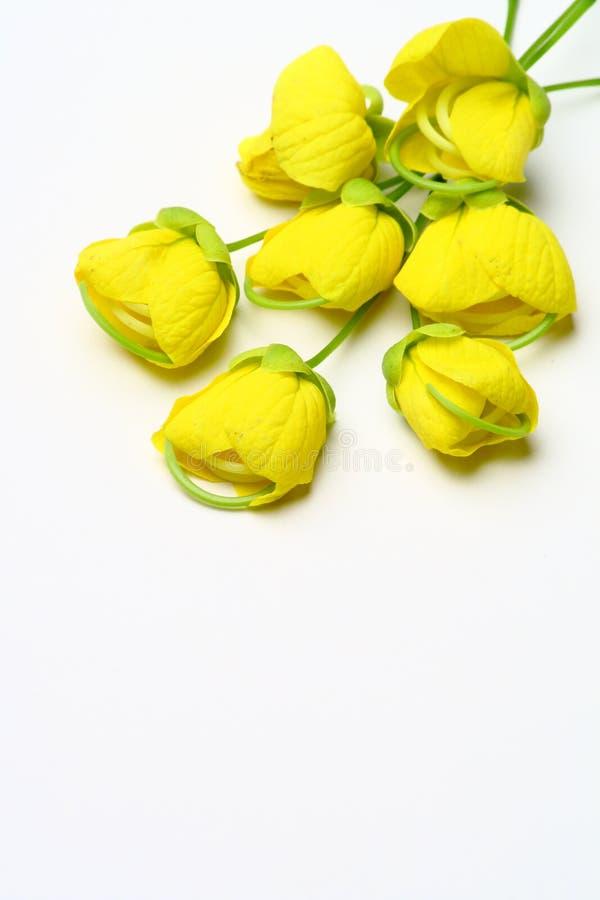 Goldene Duscheblume lizenzfreie stockbilder