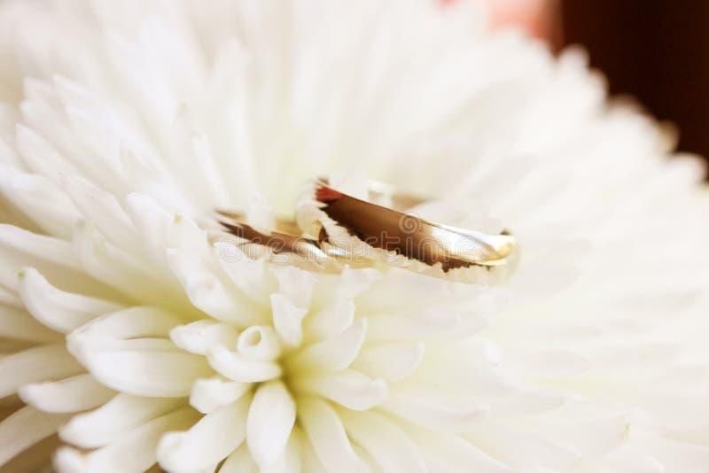 Goldene Eheringe auf weißer Chrysanthemenblume, Heiratsdetails lizenzfreie stockfotos