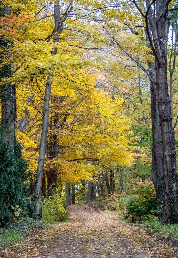 Goldene Eiche verlässt auf einem ländlichen Schotterweg lizenzfreies stockfoto