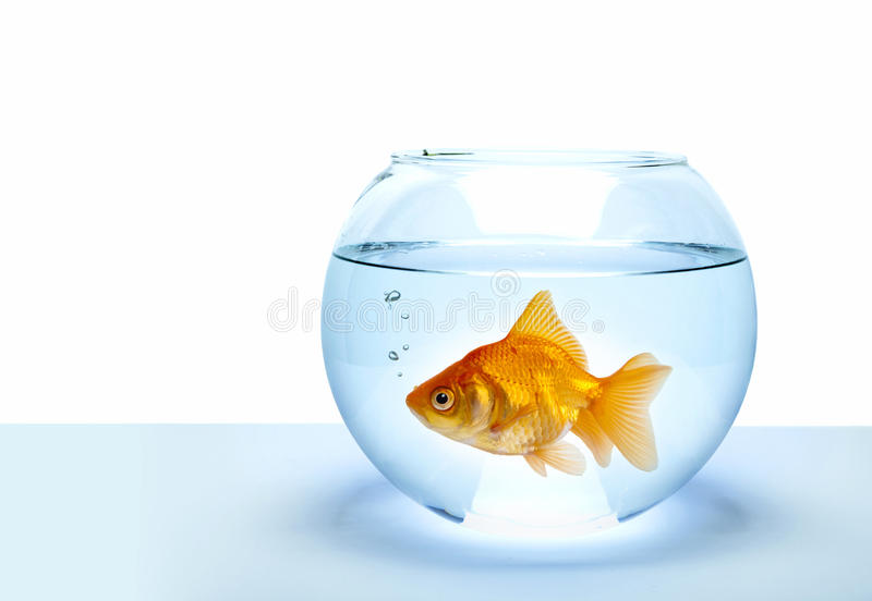 Goldene Fische