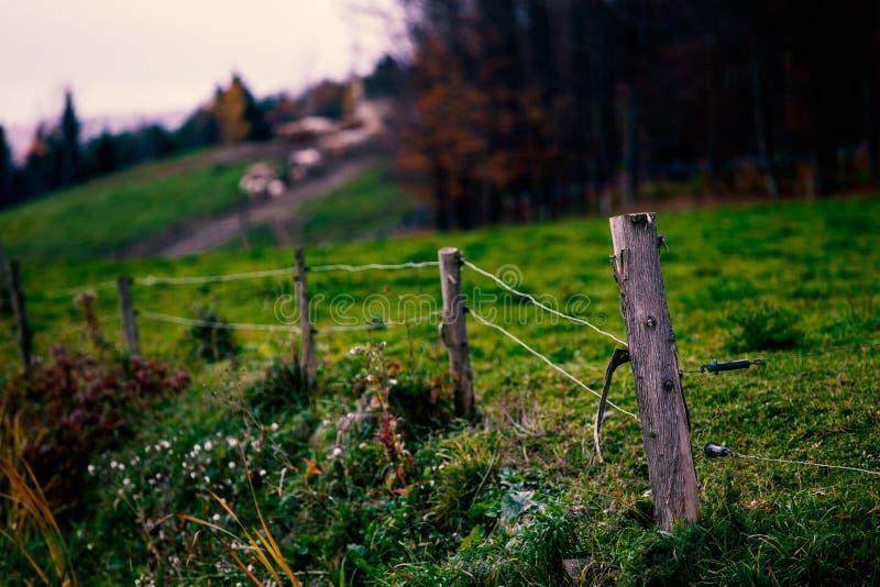 Goldene Gräser und Bauernhof-Zaun lizenzfreies stockfoto