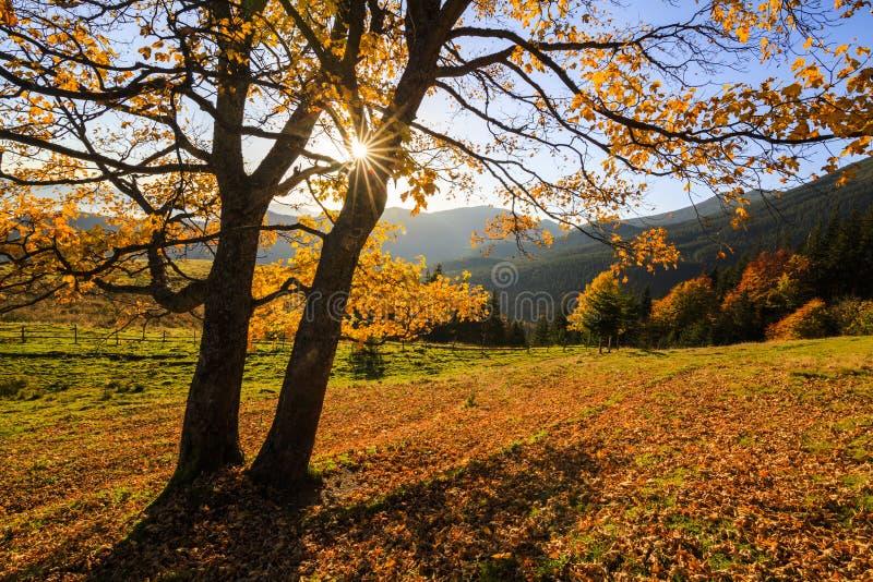 Goldene Herbstlandschaft stockbild