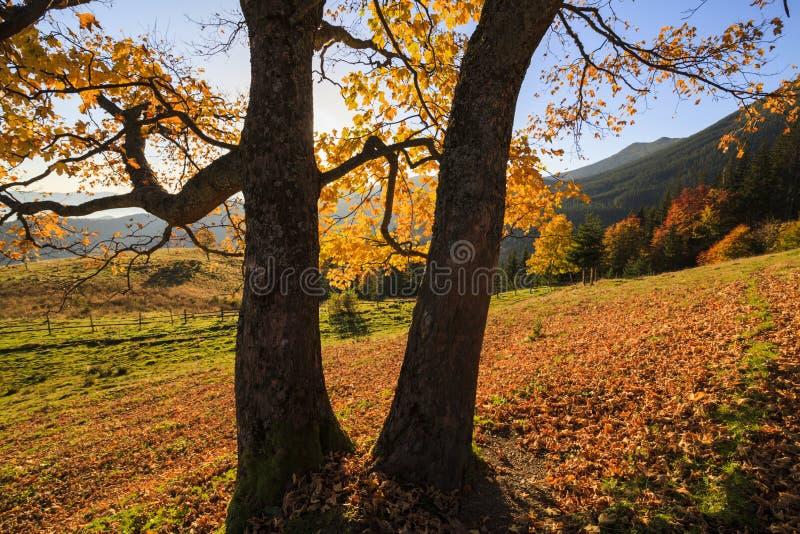 Goldene Herbstlandschaft stockbilder