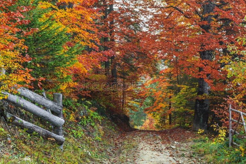 Goldene Herbstlandschaft lizenzfreies stockbild