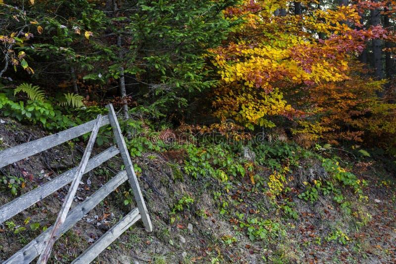 Goldene Herbstlandschaft lizenzfreie stockbilder