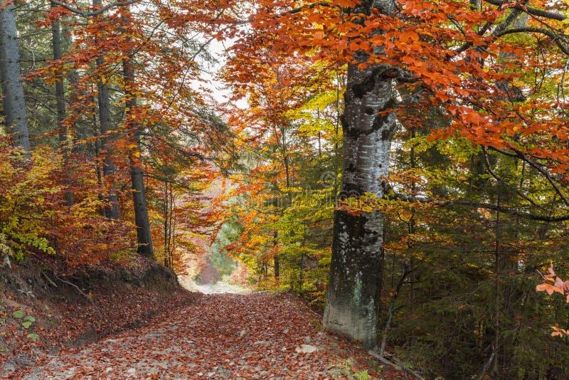 Goldene Herbstlandschaft stockfotografie