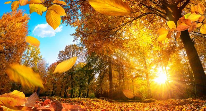 Goldene Herbstszene mit fallenden Blättern lizenzfreies stockfoto