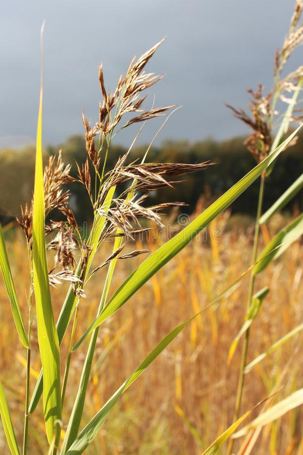 Goldene Landschaft stockfotos