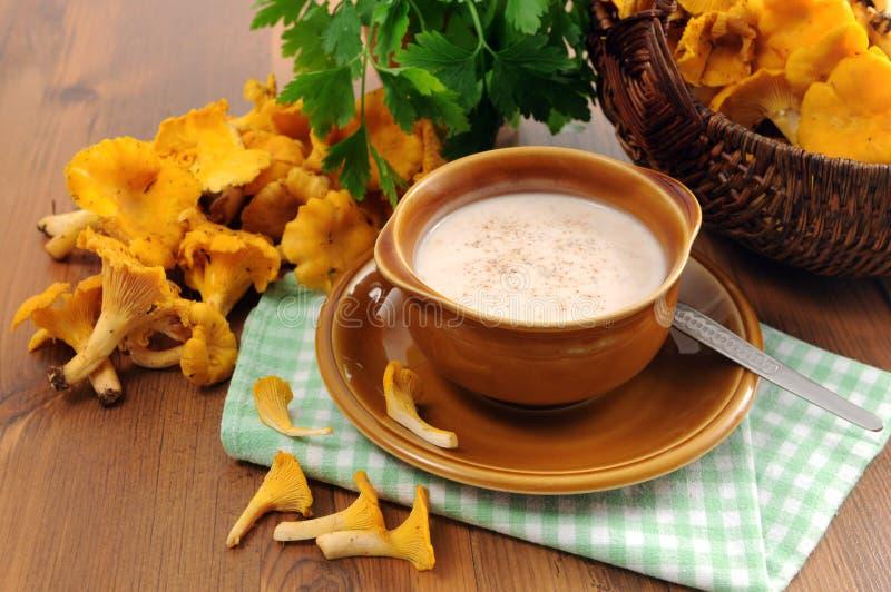 Goldene Pfifferlingschampignoncremesuppe in der Schüssel mit neuem parsle lizenzfreies stockfoto
