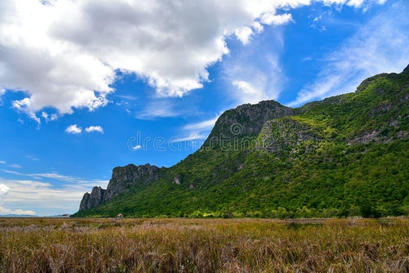 Goldene Rasenfläche und grüner Berg mit klarem blauem Himmel lizenzfreies stockbild