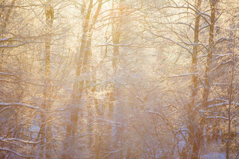 Goldene Sonne strahlt das Strömen durch schneebedeckte Waldwinterlandschaft aus lizenzfreies stockfoto