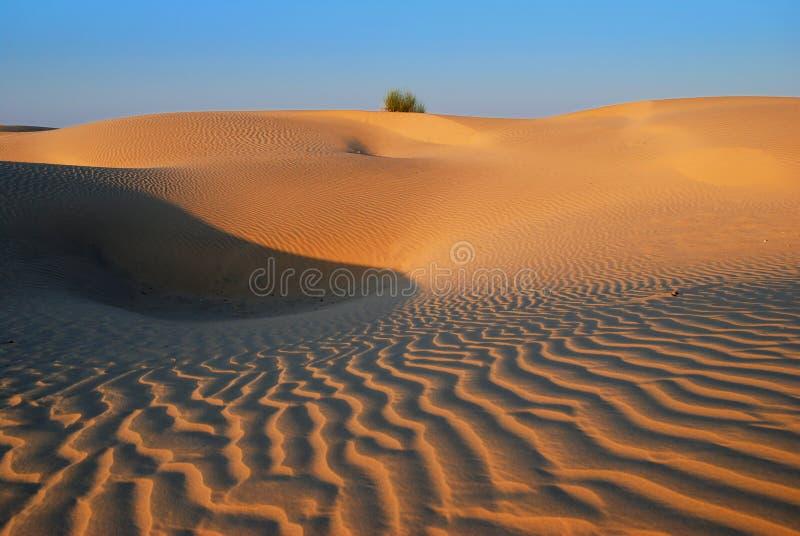 Goldene Wüste lizenzfreie stockfotografie