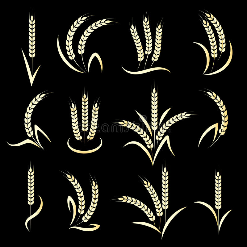 Goldene Weizenähren auf schwarzem Hintergrund lizenzfreie abbildung